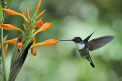 Rent a car in Martinique - Nature and hummingbirds